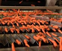 Pakavimo darbai morkų fabrike